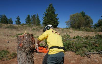 Fall Trees Manually (Intermediate)