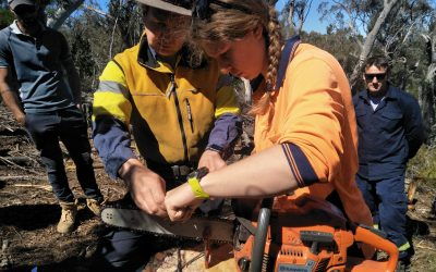 Trim and Cut Felled Trees – FWPCOT2239